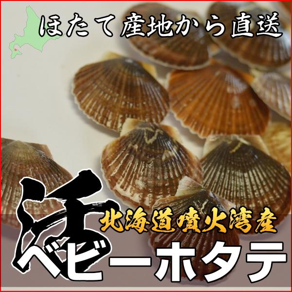 北海道産 活ベビーホタテ貝 新鮮産直ネット