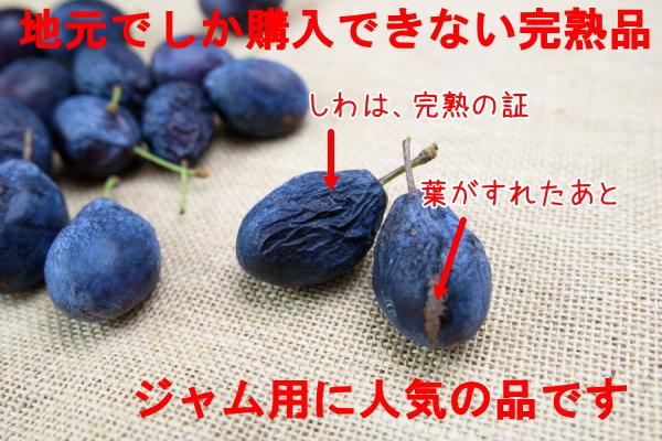 生プルーン 北海道産